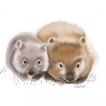 Wombat